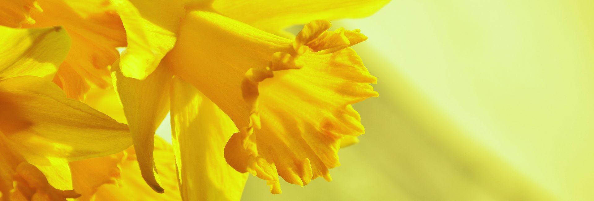 Gartenkalender April