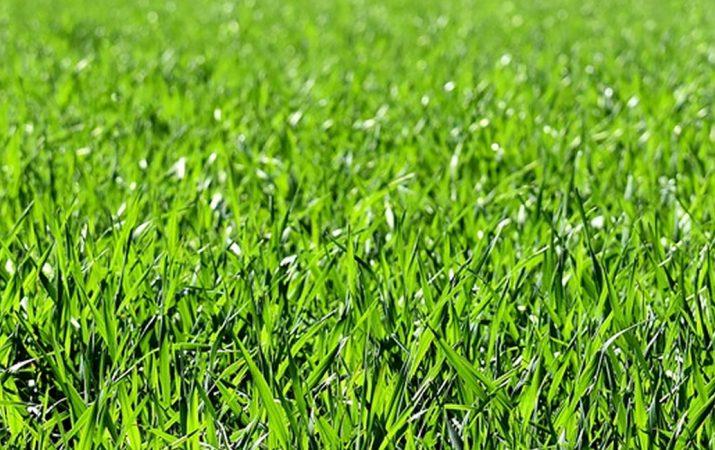 Rasen säen Ratgeber